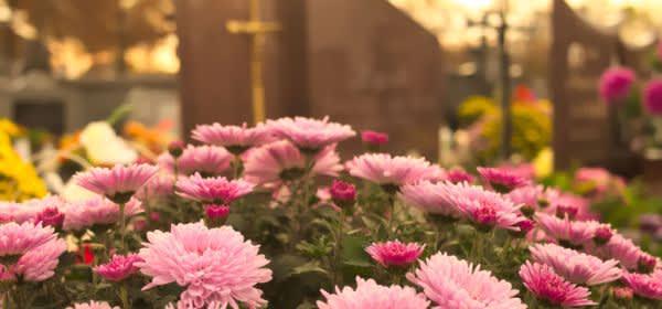 Blumen auf Grabstein mit Blick auf Friedhof