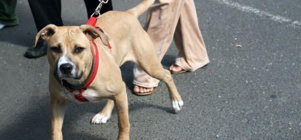 Hund an der Leine führen