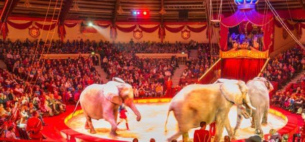 Manege im Circus Krone mit Elefanten