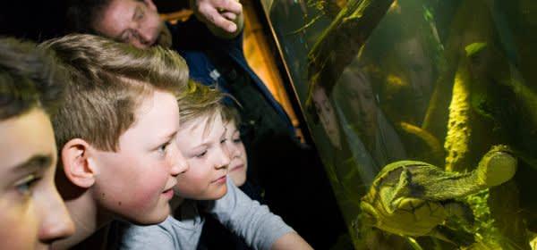 """Neue Themenwelt """"Abenteuer Schildkröte"""" im Sea Life München"""