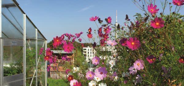 Blumen vor dem Olympiaturm.