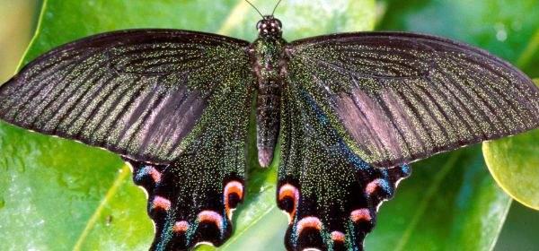 Tropischer Schmetterling im Botanischen Garten