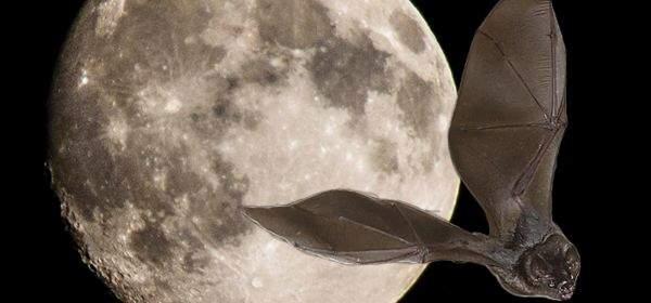 Mond und Fledermaus
