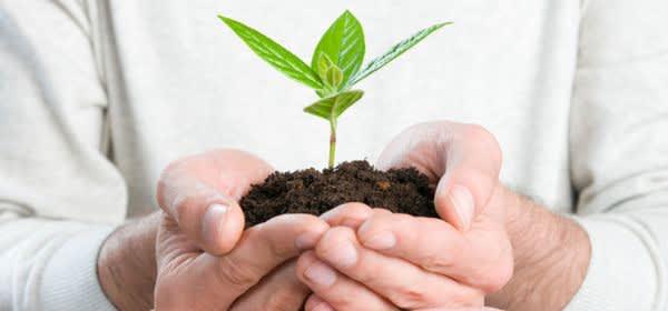 Mann hält kleine Pflanze in der Hand