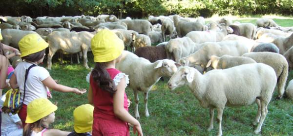 Auf zu neuen Schafen