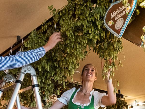 Vorbereitungen zur WirtshausWiesn in den Münchner Stubn