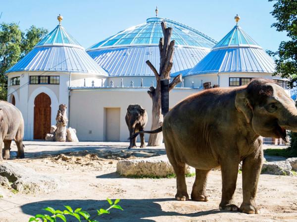 Das fertig gestellte Elefantenhaus im Tierpark Hellabrunn