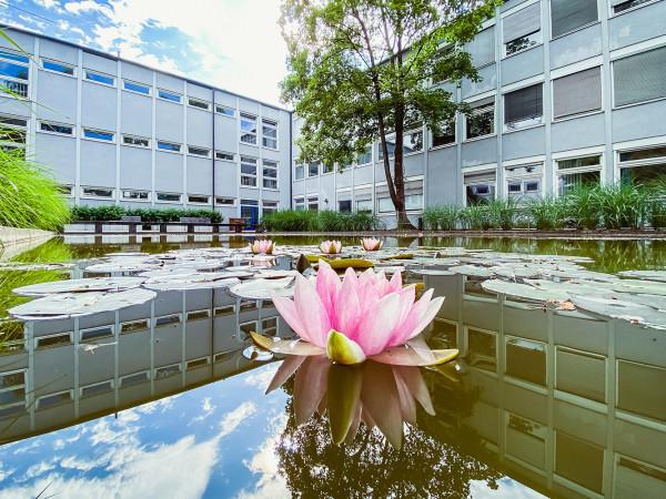 Seerosen auf dem Teich im Innenhof der Städtischen Franz-Auweck-Abendschule