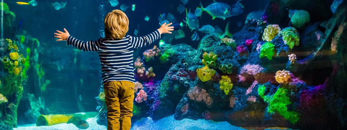 Kind vor Aquarium im Sea Life