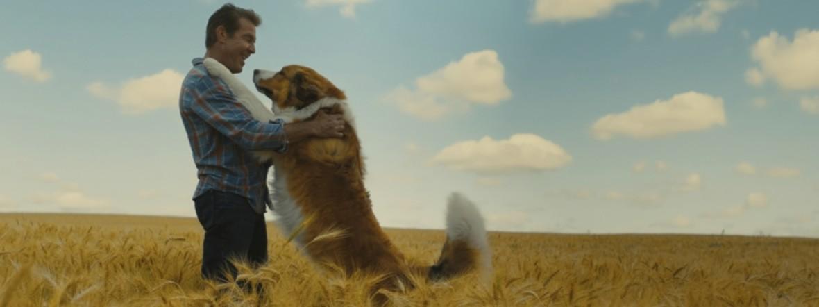 """Filmszene aus """"Bailey - ein Hund kommt zurück"""""""
