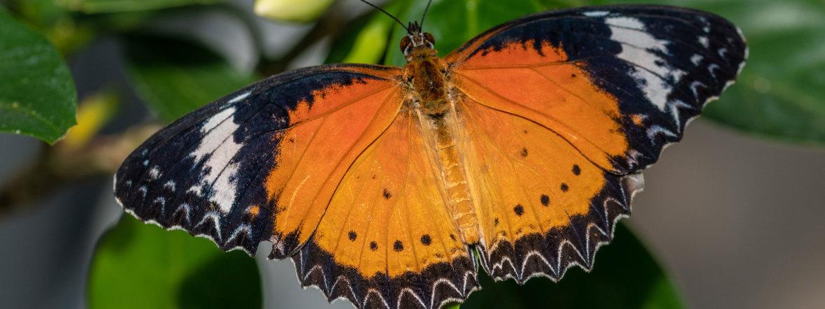 Schmetterling im Botanischen Garten