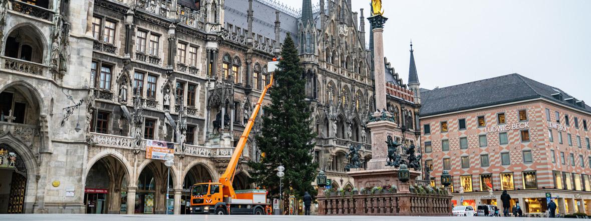Der Christbaum 2020 wird auf dem Marienplatz in München aufgestellt