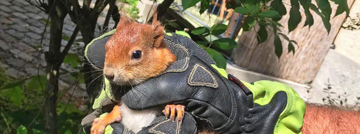 Feuerwehr rettet Eichhörnchen, Foto: Berufsfeuerwehr München