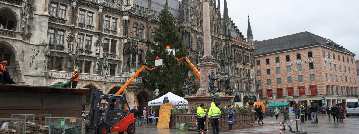 Münchens neuer Christbaum 2019 am Marienplatz, Foto: muenchen.de / Michael Hofmann