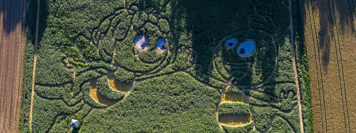 Biene Maja Labyrinth im Maisfeld am Ammersee, Foto: Wolfgang Größlinger Fotografie