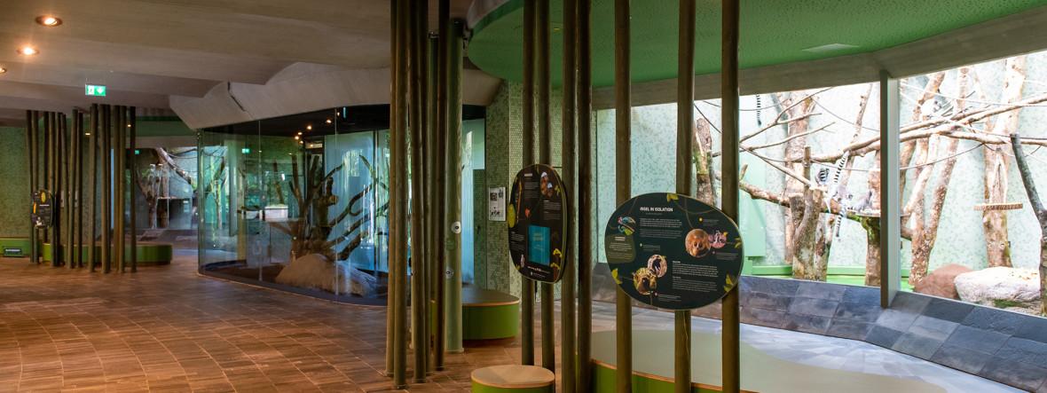 Fertigstellung des Hauses der kleinen Affen in Hellabrunn, Foto: Tierpark Hellabrunn/ Lennart Preiss