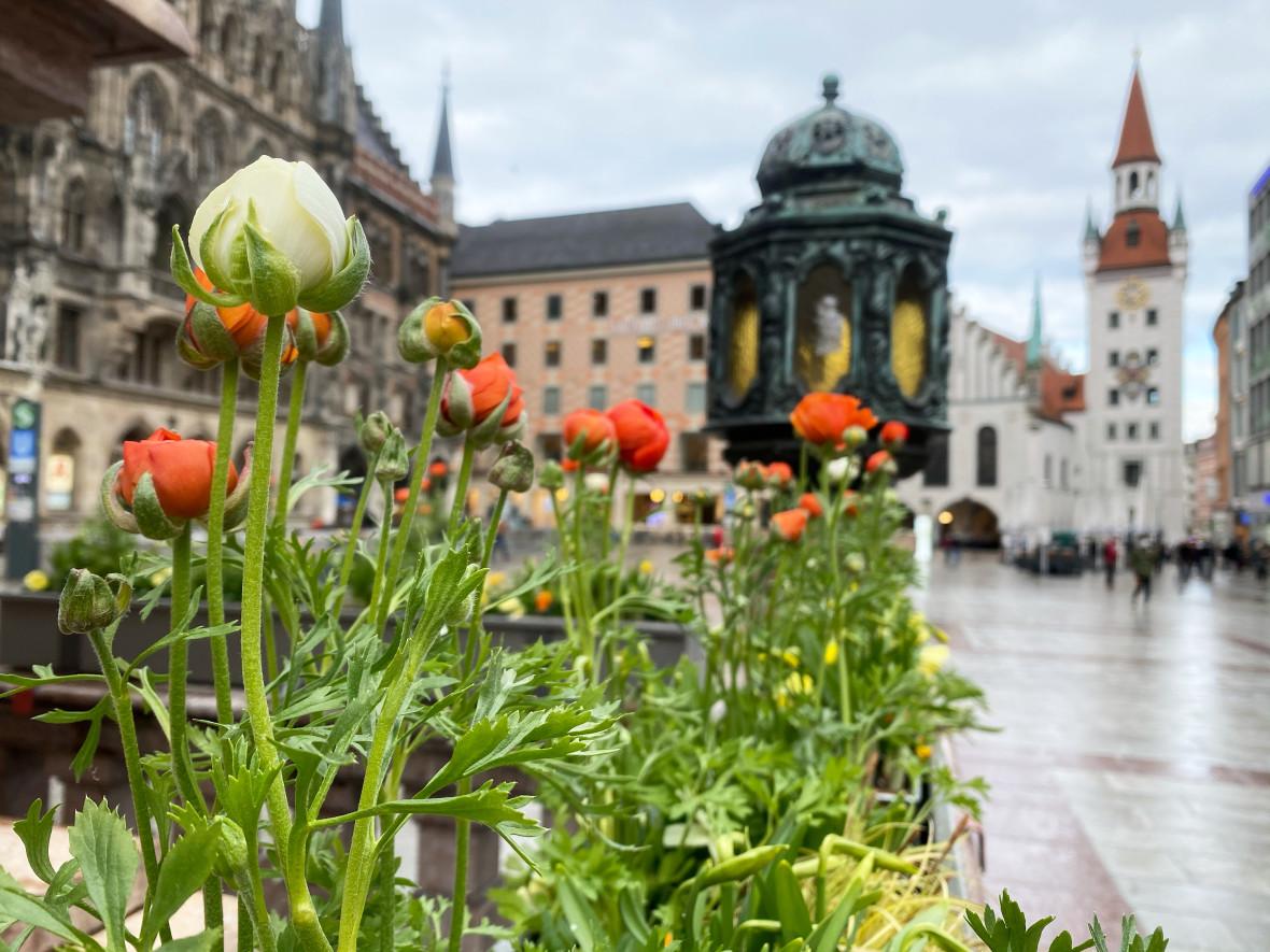 Der Frühjahrsflor an der Mariensäule am Marienplatz, Foto: Anette Göttlicher