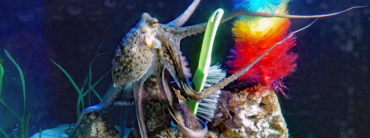 Oktopus im Sea Life, Foto: SEA LIFE
