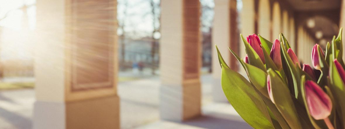 Vorfrühling im Hofgarten, Foto: Anette Göttlicher