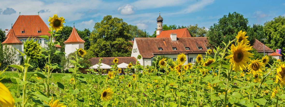 Sonnenblumen am Schloss Blutenburg, Foto: muenchen.de/Michael Hofmann