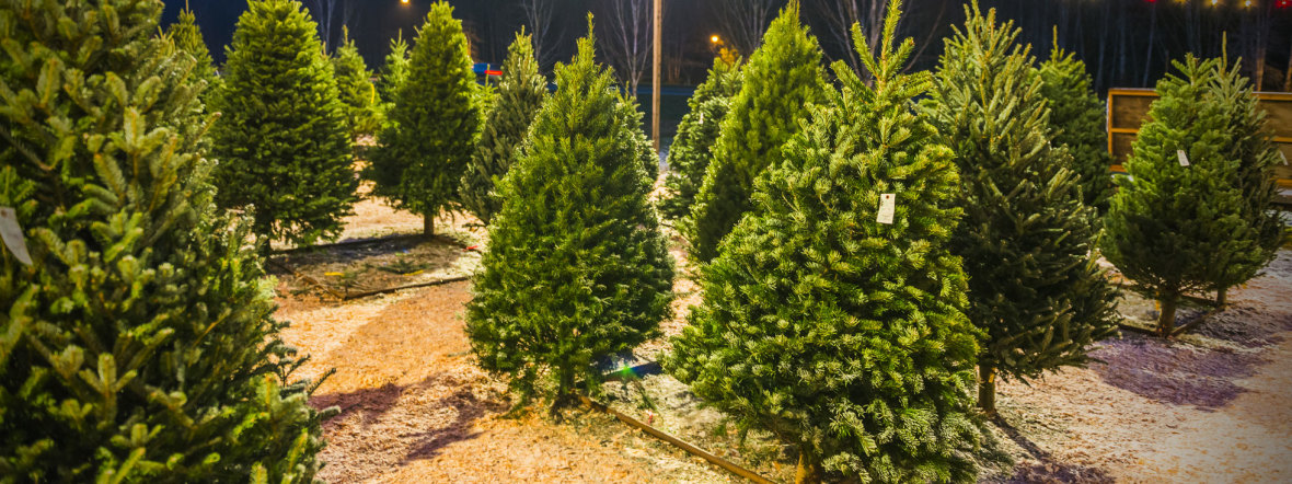 Weihnachtsbaum-Verkauf