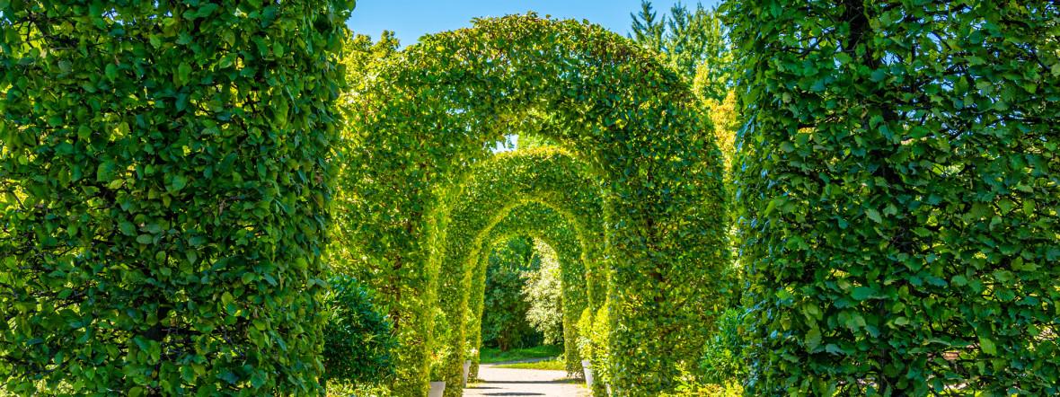 Rosengarten an der Isar in München, Foto: Michael Hofmann