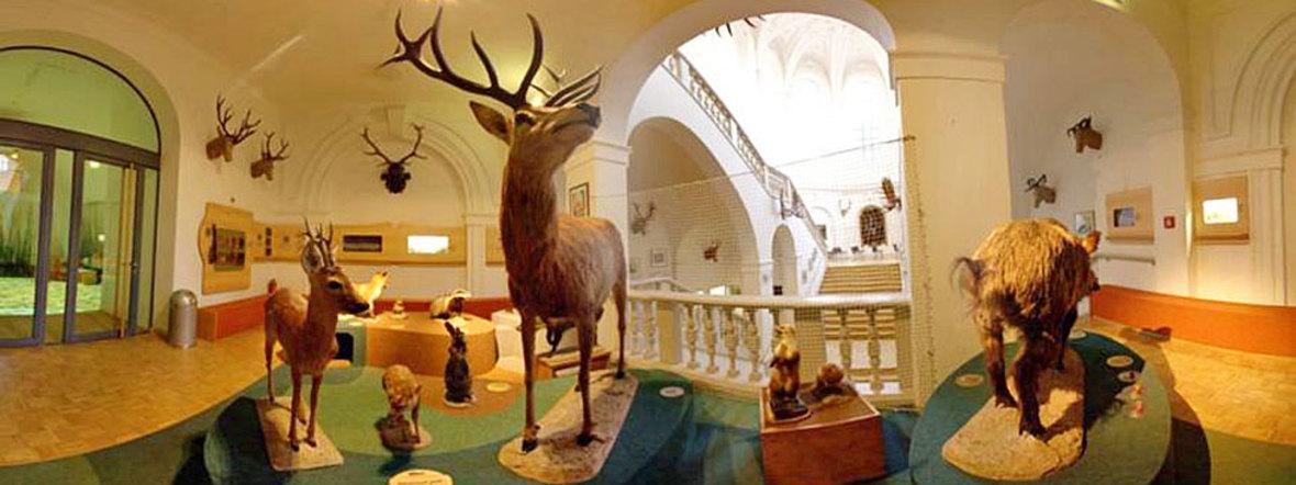 Jagd- und Fischereimuseum, Foto: Deutsches Jagd- und Fischereimuseum München