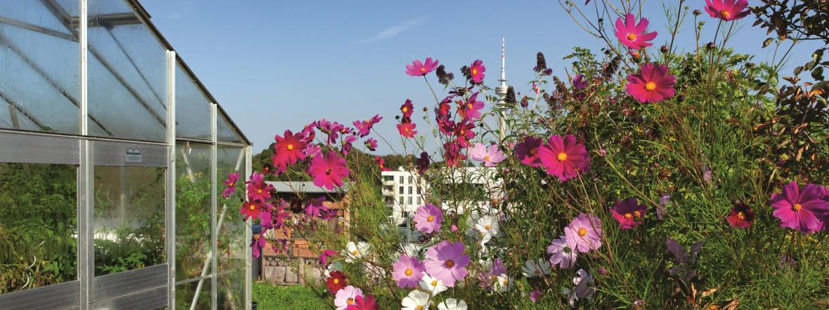 Blumen vor dem Olympiaturm., Foto:  Sigl Affairs / Landeshauptstadt München